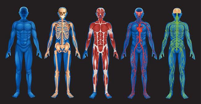 insan bədəni